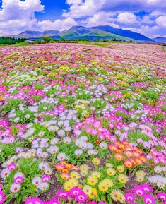 Raising flowers is already one of the happiest things in life. But if a dear person plantes a lot of flowers for you? Beautiful World, Beautiful Images, Beautiful Flowers, Wild Life, Nature Pictures, Flower Pictures, Amazing Nature, Beautiful Landscapes, Champs
