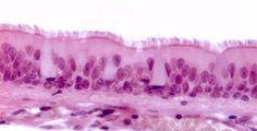 Microscopia online dating