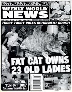 Fat cat owns 23 old ladies ^ Tubby tabby rules retirement roost! Crazy Cat Lady, Crazy Cats, Funny Headlines, Newspaper Headlines, Oh The Humanity, T Games, Bat Boys, Fat Cats, Geek Culture