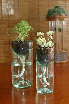 Inside herb garden?