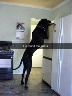 Funny Animal Pictures Of The Day – 15 Pics