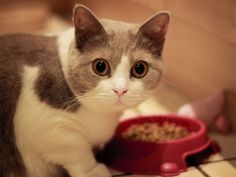 Healthy Foods For Your Cats