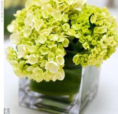 Reception flowers - green and white perfecttt Banquet Centerpieces, Small Centerpieces, Reception Decorations, Wedding Centerpieces, Centerpiece Ideas, Green Wedding, Floral Wedding, Wedding Colors, Wedding Flowers