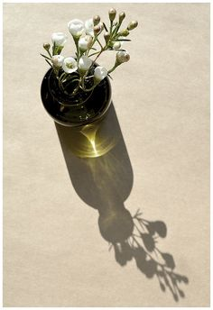 ♂ Still life photography glass vase flowers shadow
