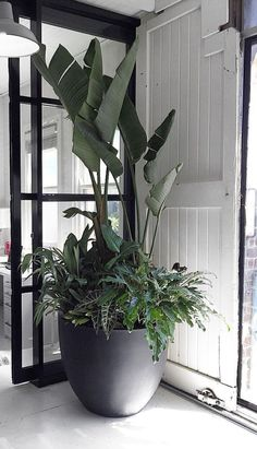 TIP - Tree Potting — Adam Robinson Design Giant house plantsGiant house plants Large Outdoor Planters, Outdoor Pots, Outdoor Gardens, Indoor Gardening, Outdoor Potted Plants, Potted Palms, Large Indoor Plants, Large Plant Pots, Indoor Plant Pots