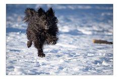 Bessy Dogs, Nature, Travel, Doggies, Naturaleza, Viajes, Destinations, Traveling, Trips