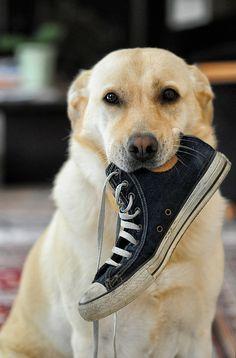 18 Truques E Dicas Que Fazem Bem Para a Saúde Do Seu Cachorro