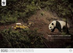 Go panda, go!!!