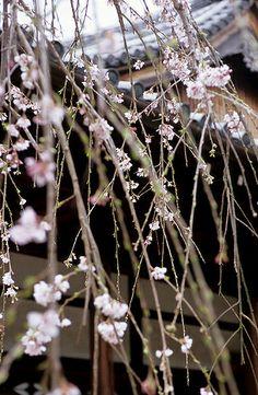 Japan, Kyoto, Uji.