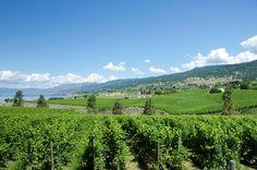 Regiones vinícolas Maravillosos