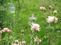 Garten Garden