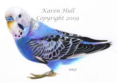 Wildlife and birds - art featuring a range of wildlife and birds by Karen Hull.   (Looks like Snuffy, my aunt's bird....S.H.)