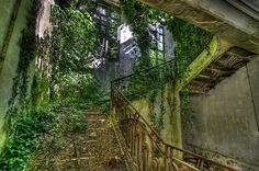 abandoned ruins of Castle Mesen in Lede, Belgium Abandoned Cities, Abandoned Mansions, Halloween Around The World, Dark Green Aesthetic, Gothic Mansion, Dame Nature, Expensive Houses, Stairways, Urban Decay