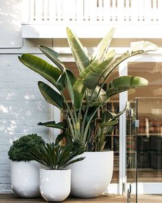 indoor decorative plants to bring freshness; home decoration with indoor plants zone Large Outdoor Planters, Small Outdoor Spaces, Outdoor Pots, Small Spaces, Outdoor Areas, Balcony Plants, Indoor Plants, Balcony Garden, Plants On Deck