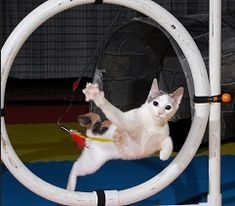 Cat agility contests... im working on the hoop :)