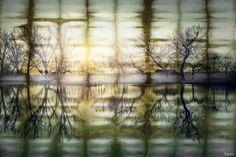 Calming Reflection - Parvez Taj