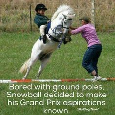 Haha been there before - Horses Funny - Funny Horse Meme - - Haha been there before The post Haha been there before appeared first on Gag Dad. Funny Horse Memes, Funny Horse Pictures, Funny Horses, Cute Horses, Pretty Horses, Horse Love, Beautiful Horses, Funny Animals, Horse Humor