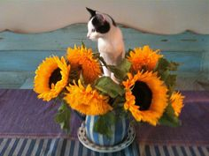 freya in bloom  photo: mick lindberg