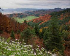 Black Forest Germany | Black Forest, Germany