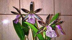 cultivando Orquídeas e idéias: OS VILÕES DAS ORQUIDEAS! OS 10 ERROS QUE DEVEM SER...