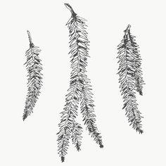 Penguin Illustration, Plant Illustration, Pine Branch, Branches, Leaves Doodle, Branch Vector, Christmas Plants, Flower Illustrations, Plant Vector