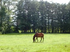 Horses at Usedom, Germany