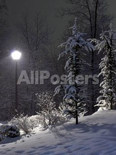 The Fir and Street Lamp Landscapes Photographic Print - 46 x 61 cm