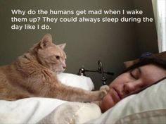 What The Cat Lady's Cats Are Really Thinking - 21 Pics