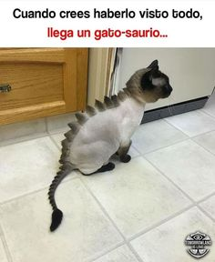 Momazos cristianos :y - Foot Tutorial and Ideas Spanish Jokes, Funny Spanish Memes, Animals And Pets, Funny Animals, Cute Animals, Funny Images, Funny Photos, Son Chat, Pinterest Memes