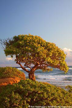 ✯ Nukolii Beach, also known as Kitchens Beach, Lihue, Kauai, Hawaii