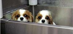 Dog Shampoo Can Be More Hazardous Than You Think