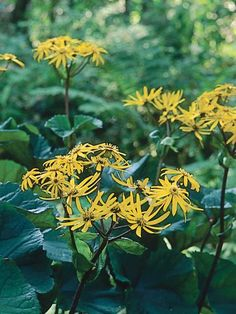 Perennial plants for fall perennial flowers perennials and a mainstay of the traditional flower garden perennials provide an abundance of bright beautiful mightylinksfo