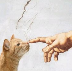 are you small :) - CAT> things - Katzen - Cat Wallpaper I Love Cats, Crazy Cats, Cute Cats, Funny Cats, Animals And Pets, Cute Animals, Cyberpunk Aesthetic, Cat Art, Cats And Kittens