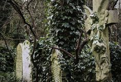 Abney Park Cemetery | Flickr - Photo Sharing!