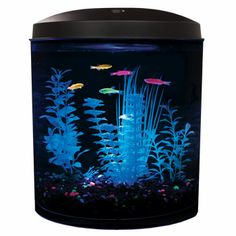1000 images about glow fish and tank ideas on pinterest for Petco betta fish price