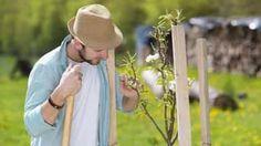 Povýsadbový rez je lepšie urobiť v jeseni či na jar? Odborník vám poradí
