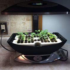 Diy Aerogarden Pods My Dream Garden Hydroponic 400 x 300