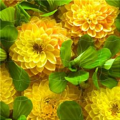 For many gardeners and recipients of a bouquets, yellow flowers are a sign of spring and will create joy in all of us. The color yellow creates joy and happiness and spreads delight and a smile for… Amazing Flowers, My Flower, Yellow Flowers, Beautiful Flowers, Dahlia Flowers, Beautiful Gorgeous, Yellow Sunflower, Cactus Flower, Exotic Flowers