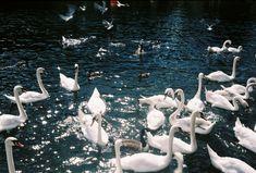 Roundhay Park #35mm #olympustrip35
