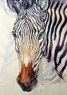 Buy Zello_ Grevy's Zebra, Watercolor by Arti Chauhan on Artfinder. Discover thousands of other original paintings, prints, sculptures and photography from independent artists.