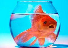 Scienze: anche i pesci sono depressi (almeno quelli in boccia...)