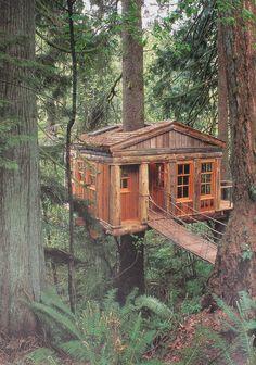 Everyone needs a tree house!