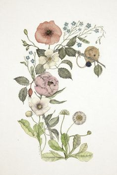 Illustration art flowers nature watercolor Daisy rose plants mouse blackberry artist on tumblr Arrangement peony poppy anemone wildflowers botanical vintage style forget me not wreath Specimen Artista illustrazione botanica Italiana illustratrice nadezda fava Merian disegno botanico blumenbuch