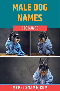 Whether your boy pup has a strong, fierce temperament, or a calm, chilled out one, we have a broad range of male dog names to suit every kind. So take a look and tell us which one is your favorite.  #boydognames #maledognames #dognames Good Boy Dog Names, Funny Dog Names, Funny Puns, Male Pet Names, Cute Boys, Calm, Strong, Range, Puppies