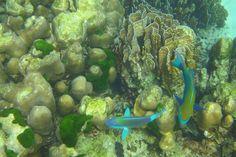 Koh Rok Island - Ko Lanta - Bewertungen und Fotos – TripAdvisor