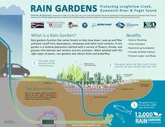 Resource Library   12,000 Rain Gardens