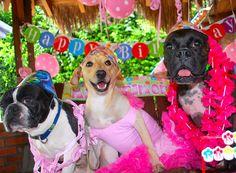 Con mis amigos celebrando mi cumpleaños perruno