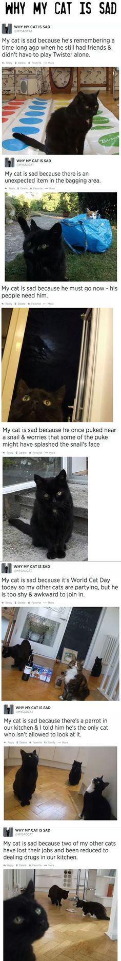 funny sad cat. why my cat is sad.