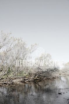 THE BROOK  Fine Art Photographic Print via Hedgerow+Stone. Click on the image to see more!