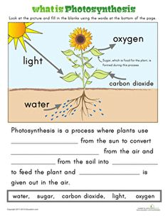 Ever wonder how the sun helps plants grow? Here is an easy way to explain the process of photosynthesis to your first grader.